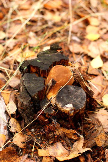 Wood and leaves in autumn tree stump №50578