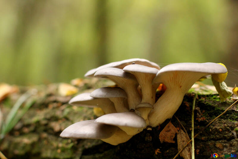 Mushroom on tree №50596