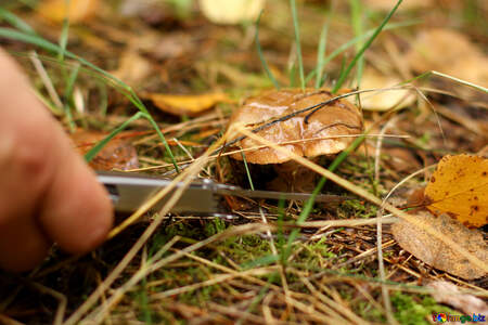 Finger and mushrooms in grass and leaves №50604