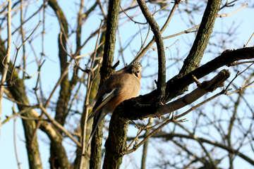 bird sitting on tree branch №51409