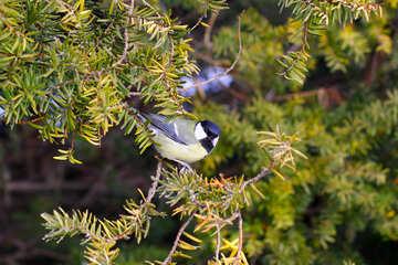 Bird on a tree branch №51402
