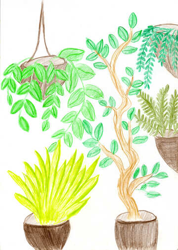 Watercolor pen drawing home plants №51551