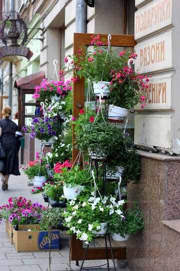Flowers hanging on a shelf pots door street plants №51779