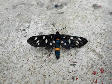 Butterfly fly moth black wings №51311