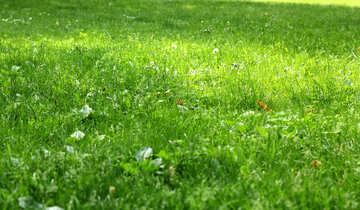 Green grass sun №51830