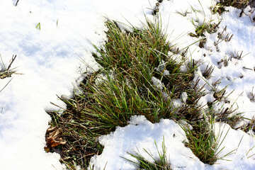 grass and snow №51442