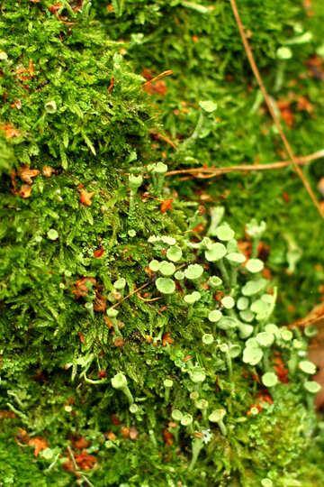 Green plants №51156