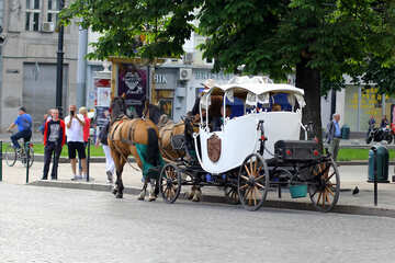 Horse and carriage in the park №51839