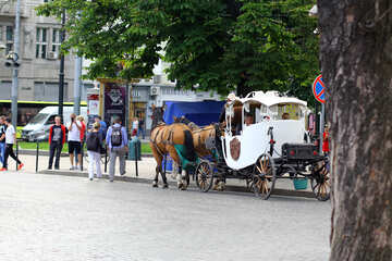 Horse carriage pulling in city №51838