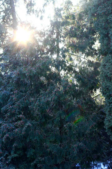 The sun peaking through the lush leaves of the trees early in the day №51459