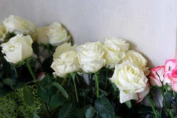 White  roses flowers №51710