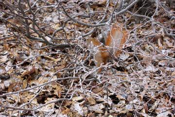 Snowy verlässt Eichhörnchen   №51315