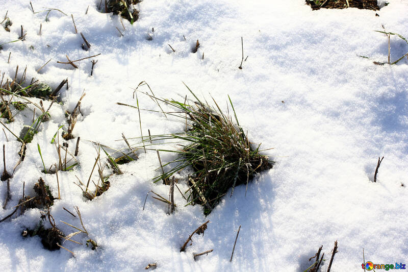 snow snow grass in a field of №51443
