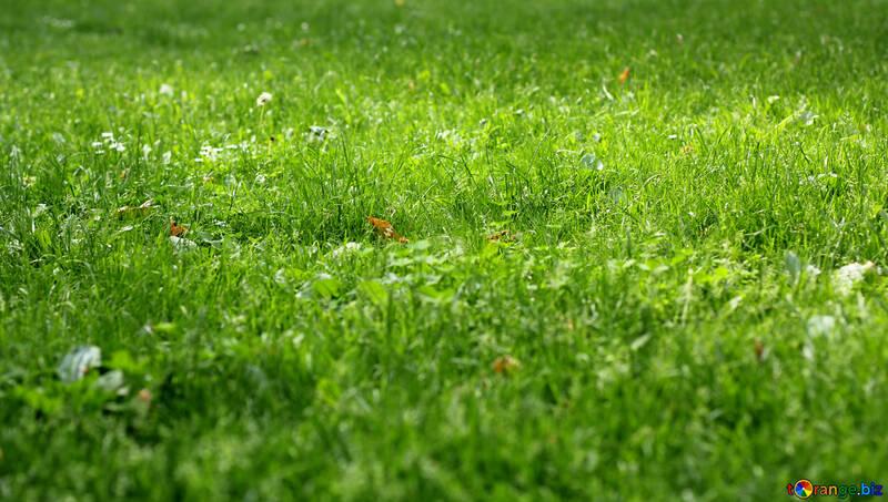 Gras ein grünes Gartenfeld №51832