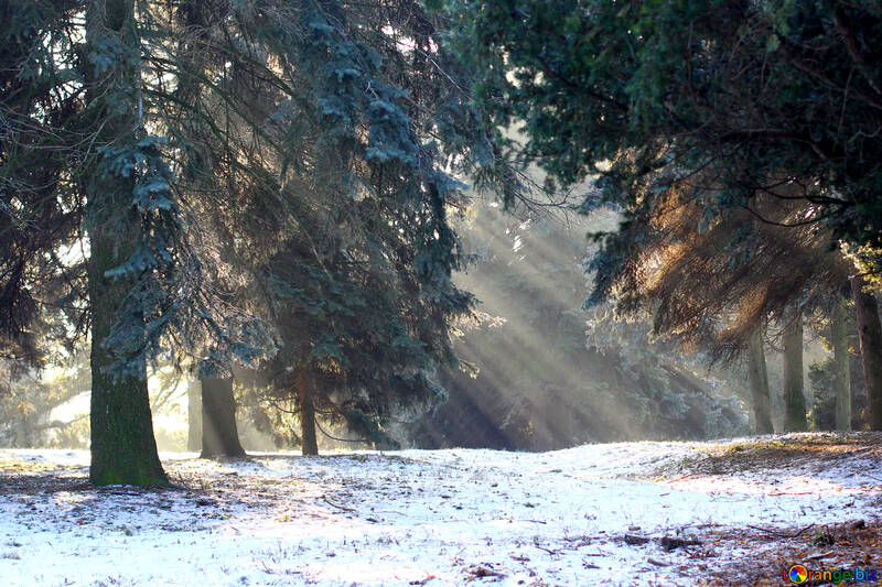 Trees snow rays of sun №51479