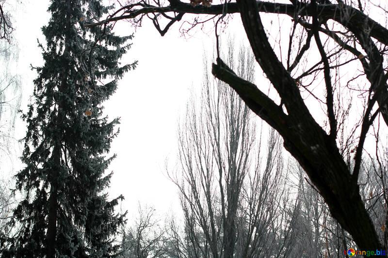 Winterwald Schone Aussicht Im Wald Schnee 51331