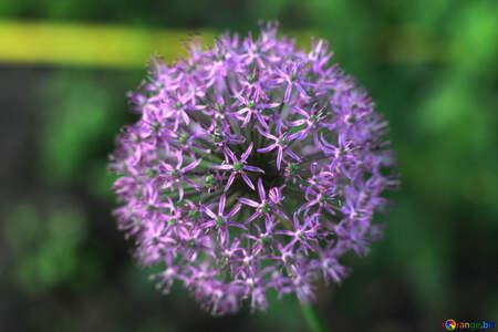 Flower sphere pink №51502