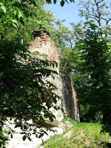 Walddschungel-Baumwand №52065