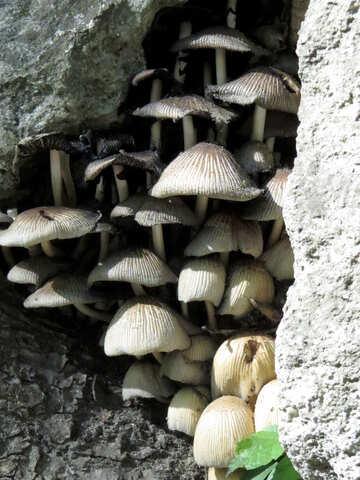 Mushrooms №52127