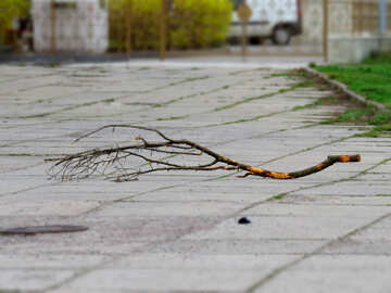 Branch stick on the ground №52442