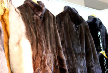 Four different coloured fur coats on a wall darkening in colour from left to right №52600