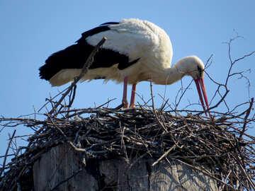 Cicogna nel suo nido bianco nero №53184