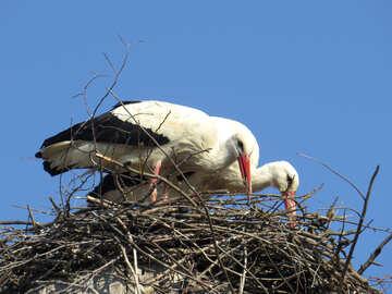 Nido di uccello della cicogna №53211