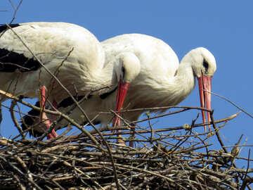 Due uccellini in un nido Love starks №53209