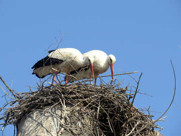 two birds watching a nest №53207