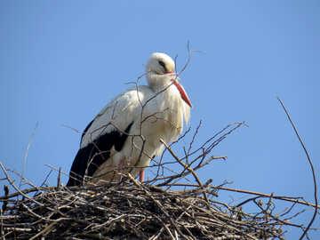 A large stork-like bird on a nest №53189
