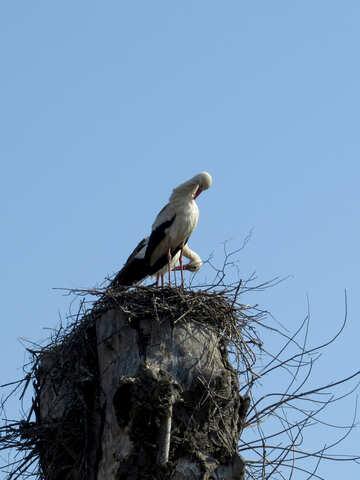 Bird in a nest storch №53175