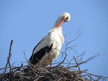 Bird nesting №53197