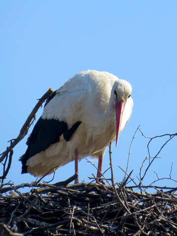 Un uccello in piedi sul suo nido. №53181