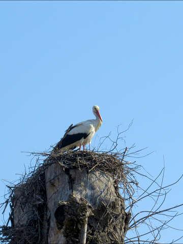 Uccello della cicogna nel nido sul post №53179