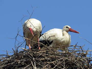 Due uccelli in un nido Cicogna №53212
