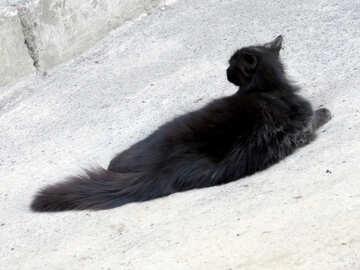 a black cat lying down №53360