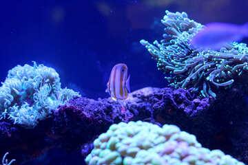blue underwater coral №53802