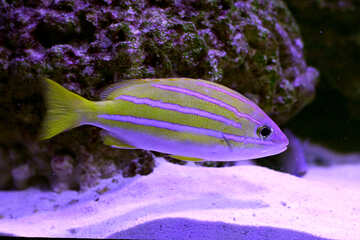 Ray-finned fish bony-fishswimming under water cool hd pics №53919