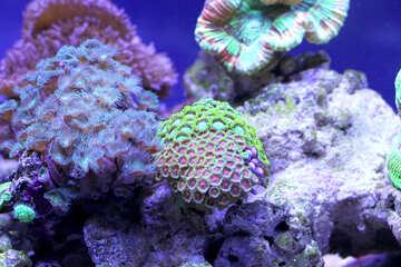 Coral Reef seashells sea shells leave corals №53825