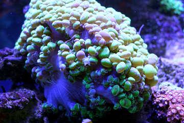 Corals reef №53800