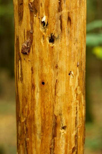 Bare wooden pole buildings №53722