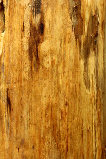 Wood will be background for work №53728