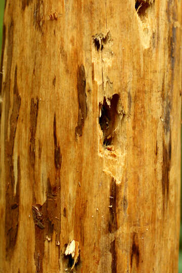 woodpecker hole №53721