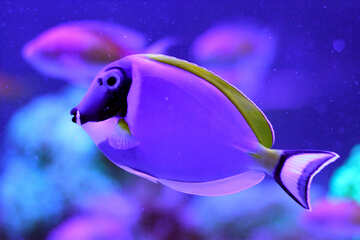 Fish №53778