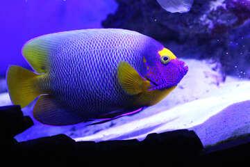 Синие и желтые пятна рыбы фон №53890
