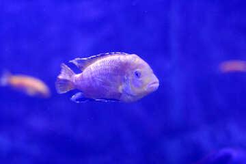 Одна рыба в воде №53939