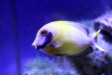 purple and yellow fish №53850