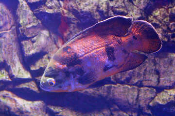 Fish rocks №53933