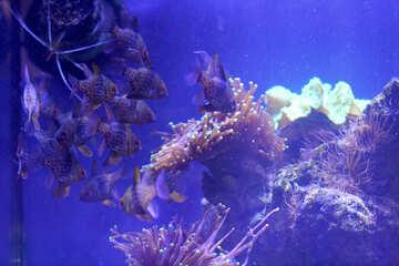 Seeweed in the ocean №53766