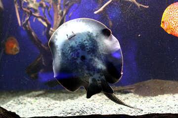 stingray fish seal №53959